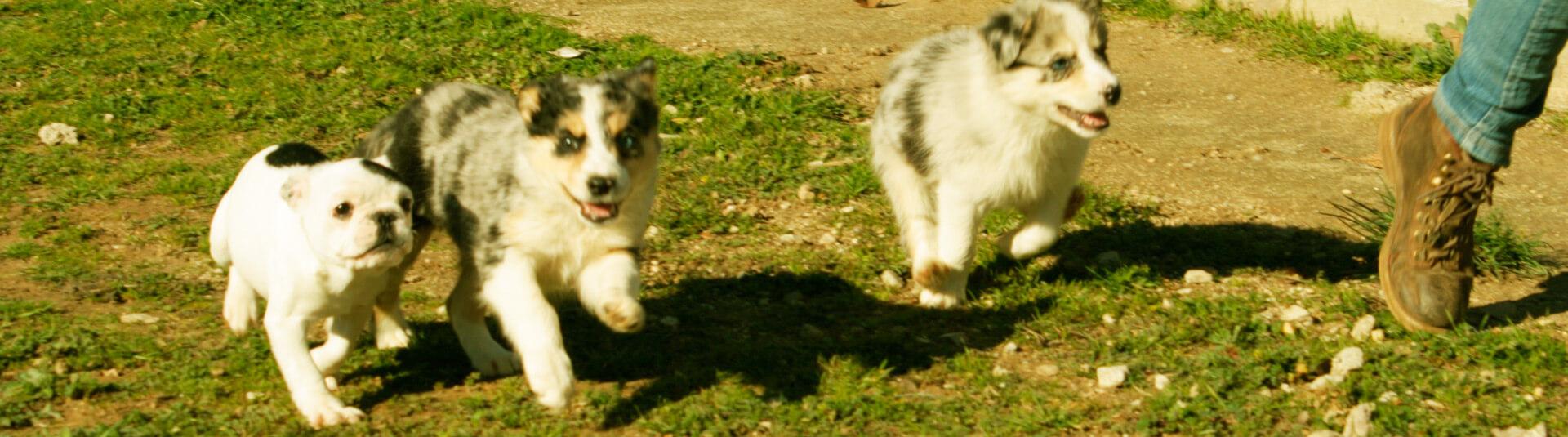 Criadero de perros en Madrid