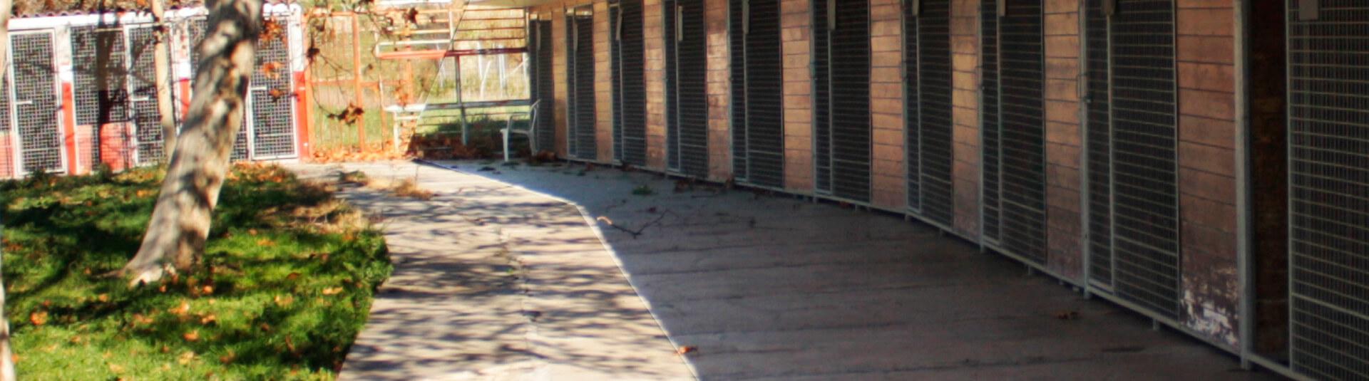 Residencia canina en Madrid
